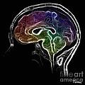 Brain And Mind by Tylir Wisdom