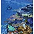 Brain Coral by Alan Mintz
