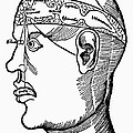 Brain Diagram, 1503 by Granger
