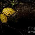Bramble Tree by Anne Gilbert