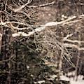 Branch In Forest In Winter by Chris Bennett