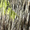 Branch In Waterfall by Gregory Scott