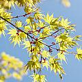 Branche In Springtime by TouTouke A Y