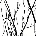 Branches by Aidan Moran