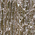 Branches And Twigs Covered In Fresh Snow by Jeelan Clark