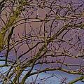 Branches by Carol Lynch