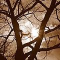 Branches In The Dark 2 by Valentino Visentini