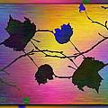 Branches In The Mist 71 by Tim Allen