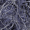 Branches by Judi Bagwell