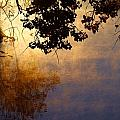 Branches Misty Pond Sunrise by Mark Wagner