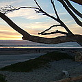 Branches Over The Beach by Susan Wyman