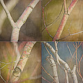 Branches Times Four by Bonnie Bruno