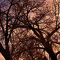 Branching Out At Sunset by James BO  Insogna