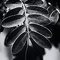 Branching Out by Christi Kraft