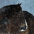 Braving The Blizzard by Holly Dwyer