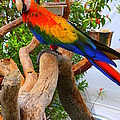 Brazilian Parrot by Dora Sofia Caputo Photographic Design and Fine Art