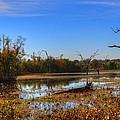 Brazos Bend Swamp by David Morefield