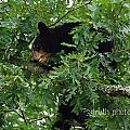 Breakfast For Bear by Ruth Tillman