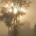 Breaking Through The Fog by Larry Ricker