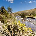 Breamish Valley In Spring by David Head