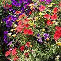 Breckenridge Bouquet by Carol Barrington