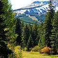 Breckenridge Fall by Michelle Frizzell-Thompson
