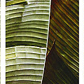 Breeze - Banana Leaf Triptych by Ben and Raisa Gertsberg