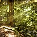 Eternal Woods by Edmund Nagele