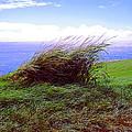 Breezy Hill by Dena Baker