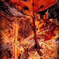 Brellow by Ed Smith