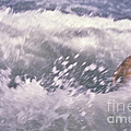 Brian Swimming In The Sea by Bruce Stanfield