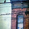 Brick Building Birds On Wires by Jill Battaglia