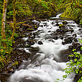 Bridal Veil Creek by Patricia Davidson