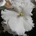 Bride's Dress by Florentina De Carvalho