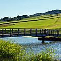 Bridge At Charmouth by Susie Peek