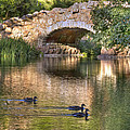 Bridge At Stow Lake by Kate Brown