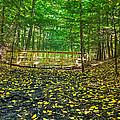 Bridge In Gosnell Big Woods by Tim Buisman