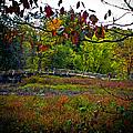 Bridge In Massachusetts Park by Charlene Gauld