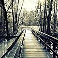 Bridge In The Wood by Valentino Visentini