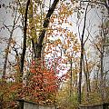 Bridge In The Woods by Kara Keeler