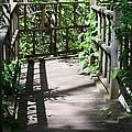 Bridge In Woods by Sonali Gangane