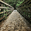 Bridge Leading Into The Bamboo Jungle by Edward Fielding