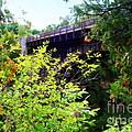 Bridge Over Ausable Chasm by Patti Whitten