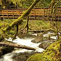 Bridge Over Paradise by Jeff Swan