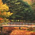Bridge To Autumn by Karol Livote