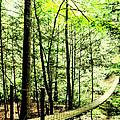 Bridge To Beauty by Heather Fox