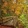Bridge To Eden by Carol Montoya
