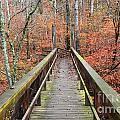 Bridge To Fall by Deanna Cagle