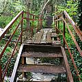 Bridge To Simiez by Jon Emery