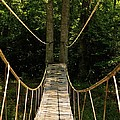 Bridge To The Forest by Maria Urso